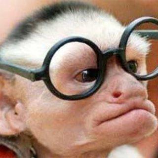 Nerdy Monkey